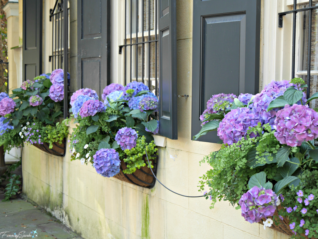 A row of window boxes planted with hydrangea @FanningSparks