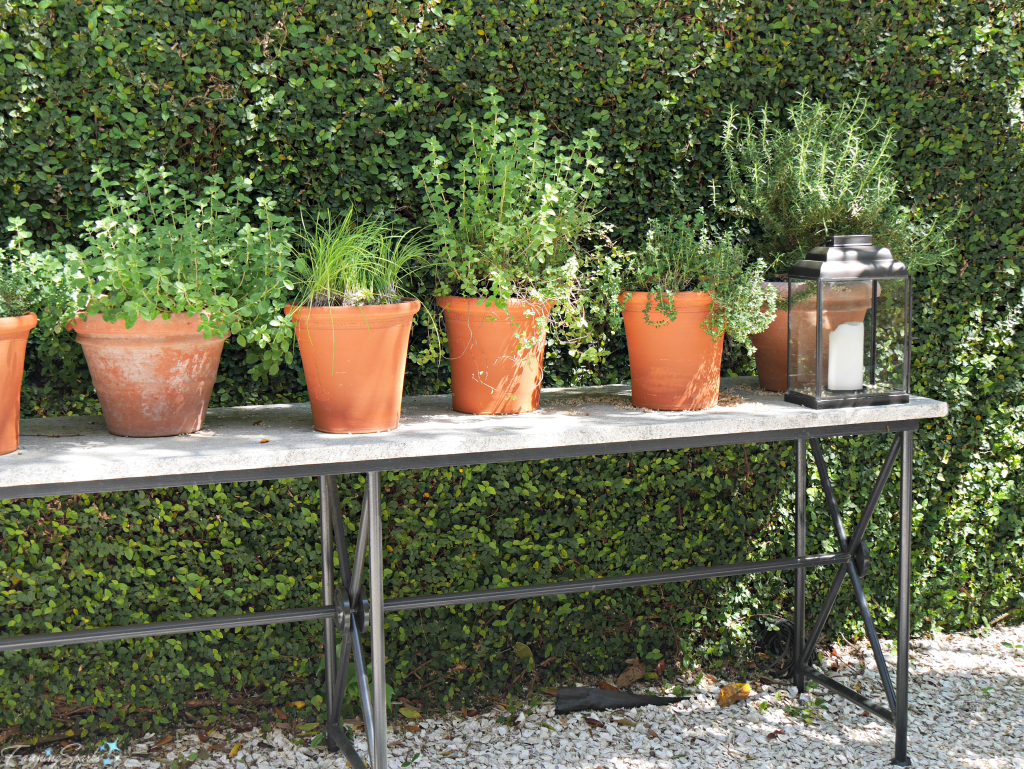 Terra cotta pots planted with herbs @FanningSparks