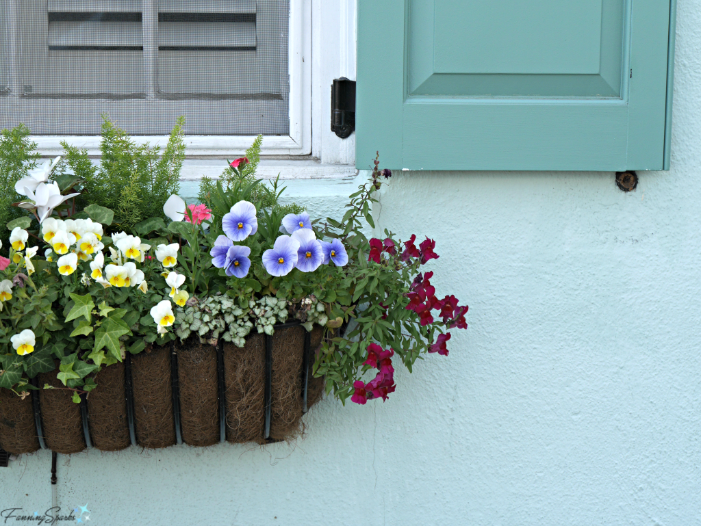 Window box with pansies against aqua wall @FanningSparks