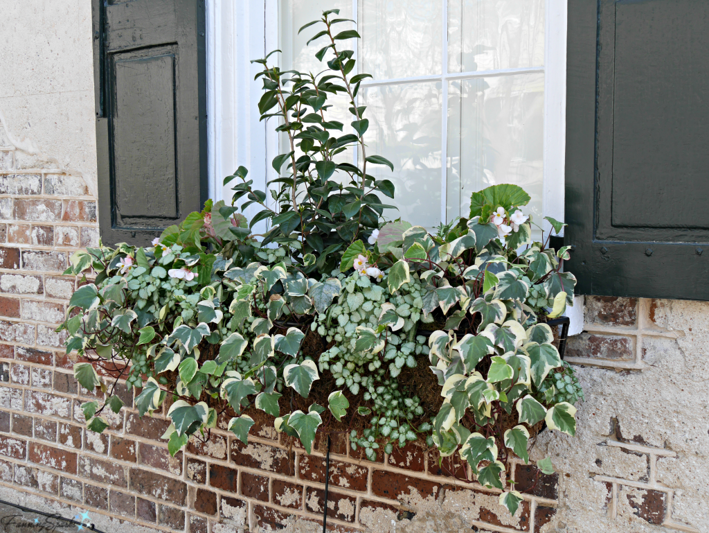 Window box with shades of green and white against brick wall @FanningSparks