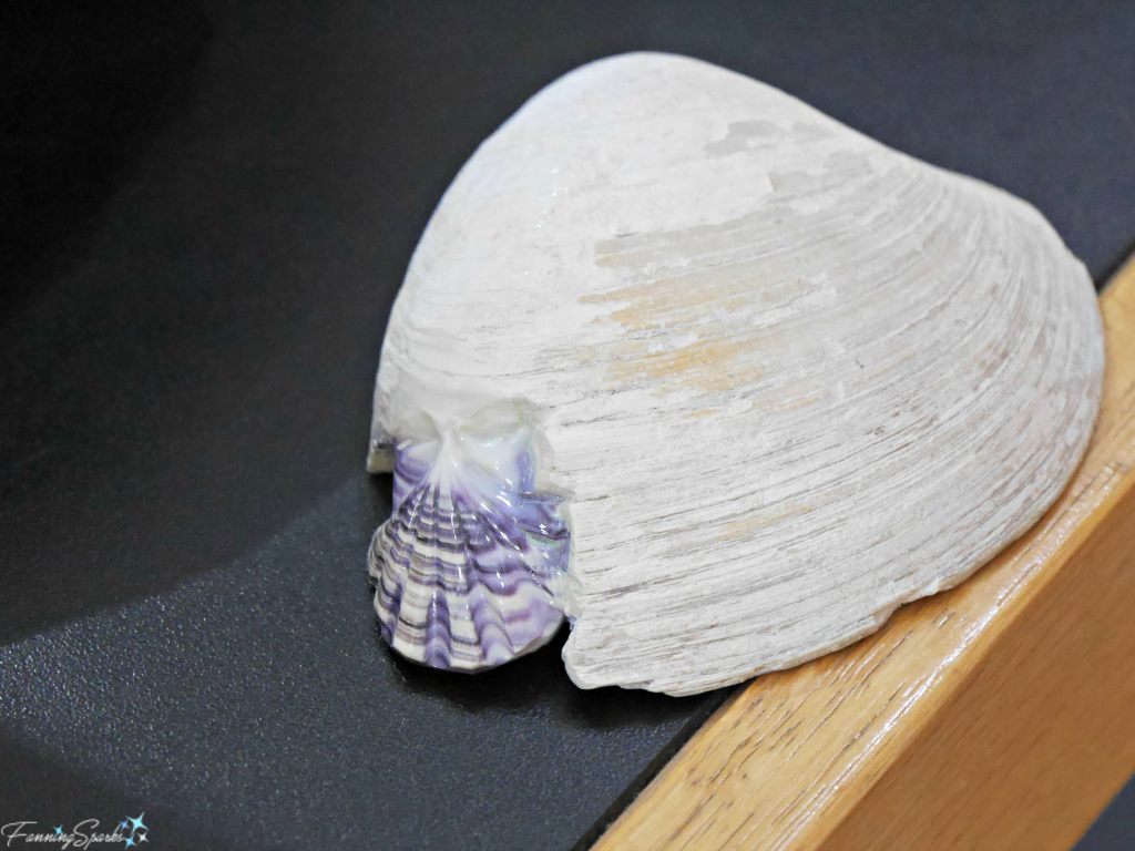 Shell Hand Carved in Quahog Shell at Wildabout Wampum. @FanningSparks