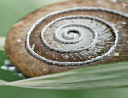 Paper Stitched Photo of Snail Closeup. @FanningSparks