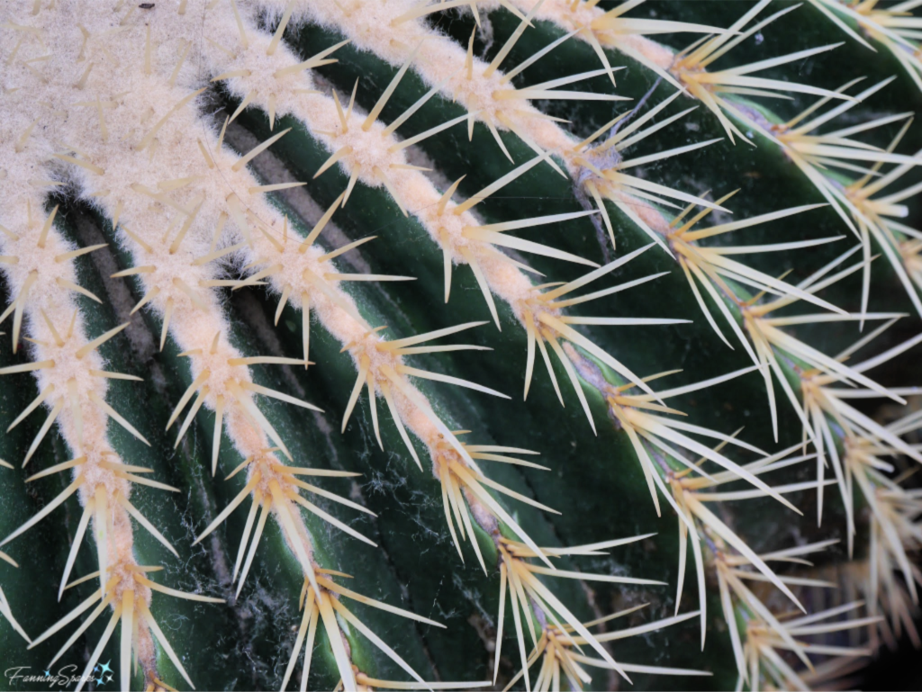 Cactus has Prickly Texture.   @FanningSparks